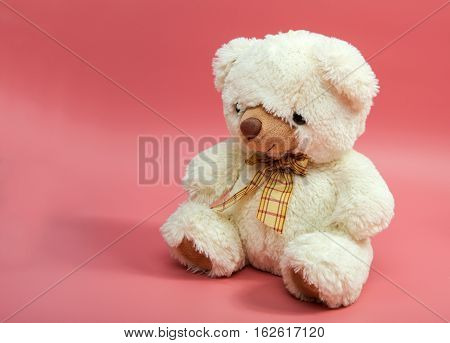 Bear soft toy isolated on pink background