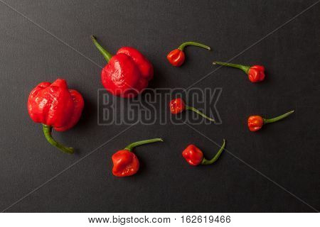 Red hot Trinidad moruga scorpion peppers on black background