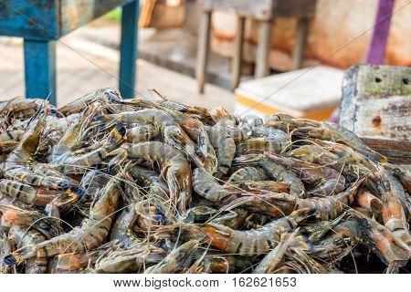 Fresh raw tiger prawns or Penaeus monodon at Asian fish market