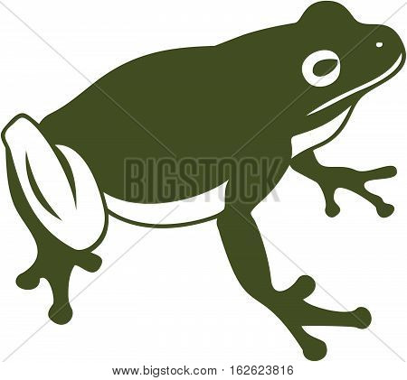 Green frog, toad, animal, isolated, vector, illustration