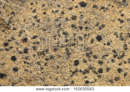 Background of rough brown stone with black spots