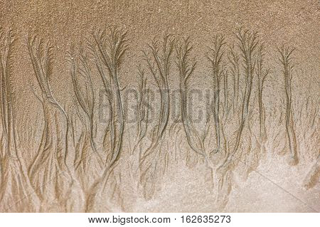 Closeup of texture formed by erosion on the sandy beach at low tide