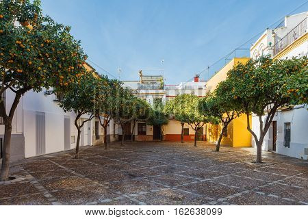 Courtyard With Orange Trees