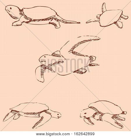 Turtles. Pencil sketch by hand. Vintage colors. Vector image