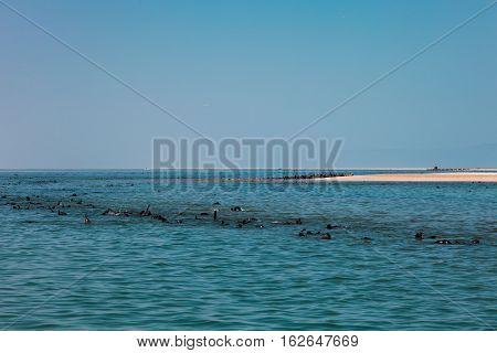 Huge Herd Of Fur Seal Swimming Near The Shore Of Skeletons In The Atlantic Ocean,