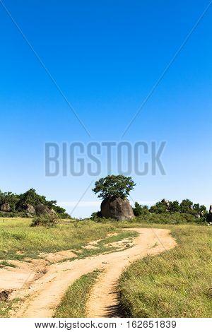 Yellow road. Landscape. Serengeti landscape. Tanzania, Africa