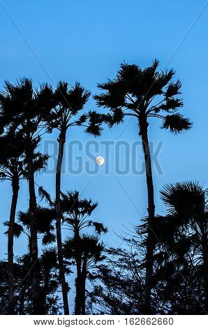 Twilight With The Full Moon And Palm Tree Silhouette
