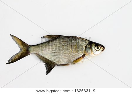 The Bream On A Background