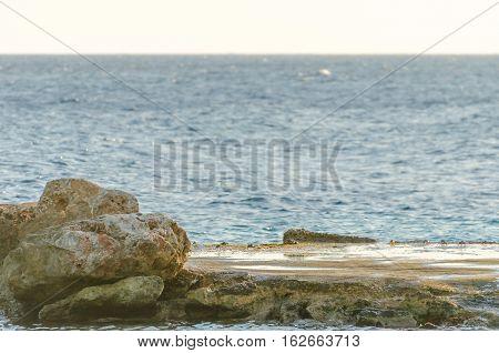 Crabs On A Rock In A Curacao Beach.