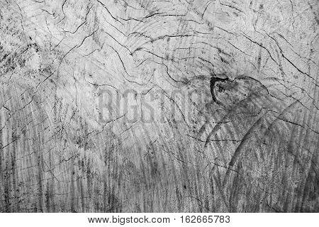 Monochrome distressed wood texture photo. Gray timber board with weathered crack lines. Natural background for shabby chic design. Grey wooden floor image. Obsolete tree cut surface close-up photo