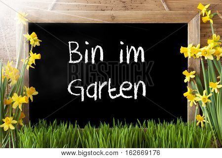 Blackboard With German Text Bin Im Garten Means I Am In The Garden. Sunny Spring Flowers Nacissus Or Daffodil With Grass. Rustic Aged Wooden Background.