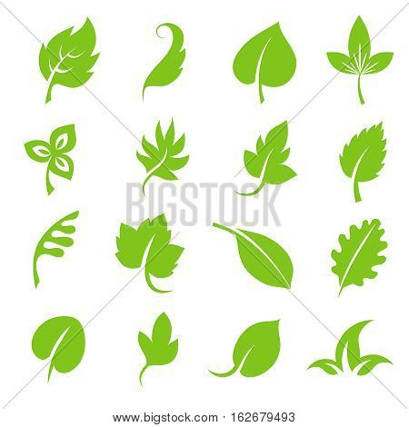 Leaf icon set. Fresh green leaves various shapes isolated on white background. Natural tree foliage, organic floral botany. Vector illustration