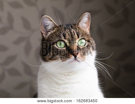 Beautiful Portrait Of A Tabby Cat Dreaming Near The Window. Funny Colored Cat With Striped Head And