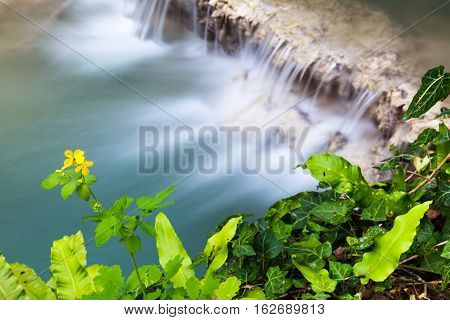 Aerial view of a beautiful waterfall cascading over a rock shelf into a tranquil pool below viewed over a fresh green leaves and a yellow flower