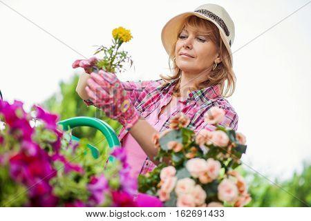 Woman working in the garden.Gardener taking care of her plants in a garden.