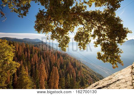Autumn sunrise over redwood trees at Moro Rock in Sequoia National Park, California, USA