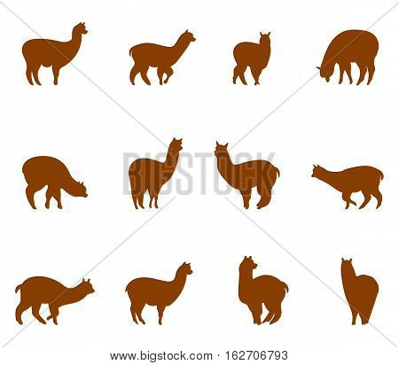 Alpaca and llams emblems collection. Silhouettes of animals isolated on white background.