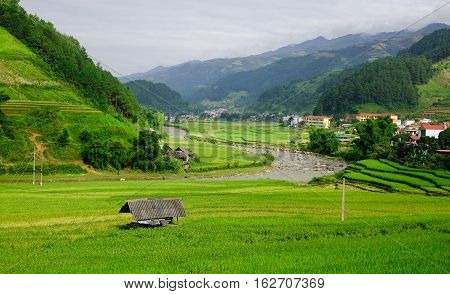Landscape Of Terraced Rice Fields In Vietnam