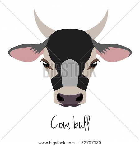 Vector cow, bull head. Animals of a farm. flat cartoon style brown calf face isolated, poster, banner, print advertisement web design element. Domestic animals. livestock.