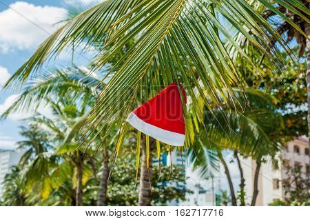 Red Santa's Hat Hanging On Palm Tree At The Tropical Beach. Christmas In Tropical Climate Concept