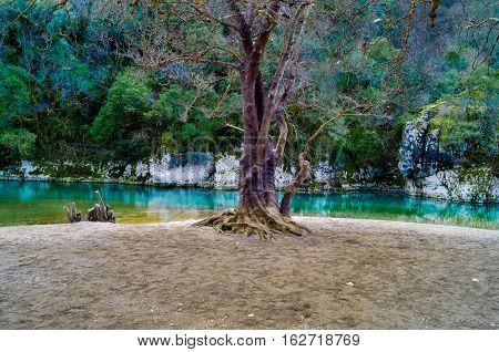 Peaceful scenic view of an old tree with a beautiful river at the background.