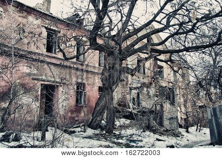 Intertwined old trees on the background of an abandoned dilapidated old mansion