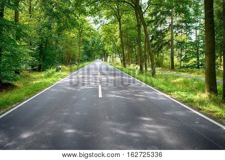 Road In The Green Forest At Sunny Day