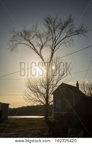 Silhouette of tree and a house at sunset in New England USA