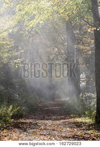 Shafts of Light on Foggy Trail in fall