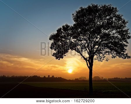 tree at sundown before a green meadow