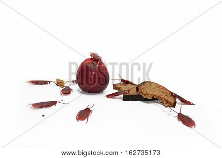 Abstract composition of poverty. Artificial cockroaches on bread.