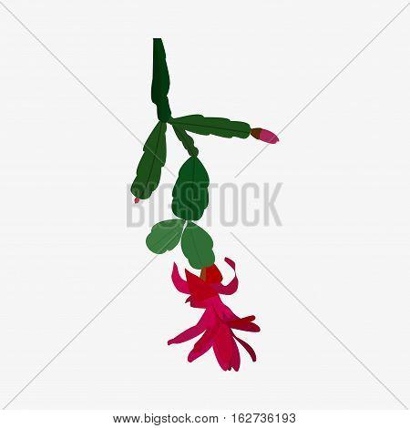 Zygocactus Icon Isolated