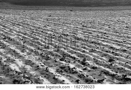 black and white photo of furrows on the ploughed field with some snow