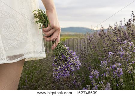 On lavender field girl in white dress holding bouquet of lavender in hand