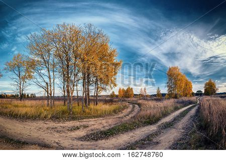 two autumn country road among trees in field on sunny day