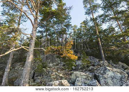 scenic view of pine trees on the cliffs at sunrise