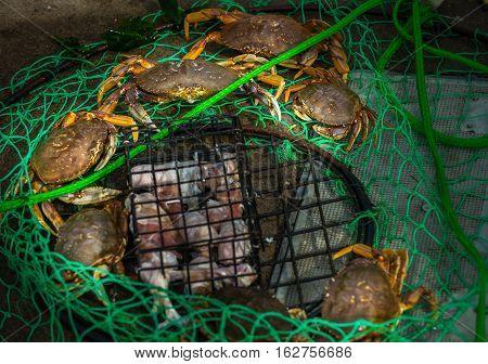 Small Crab Trap
