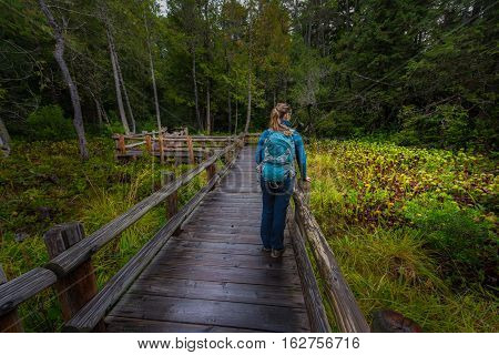 Backpacker On  Darlingtonia Walkway At Sutton Creek Campground, Siuslaw National Forest, Oregon, Usa