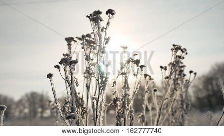 frozen grass sunlight sways in the wind in winter snow falls nature beautiful sun glare