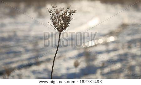 dry grass sways in wind nature winter snow landscape field sun glare steppe