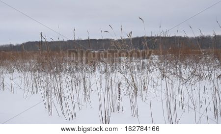 dry grass sways in wind snow winter field Beautiful nature landscape