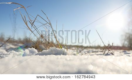 dry grass sways in wind nature winter snow landscape field steppe