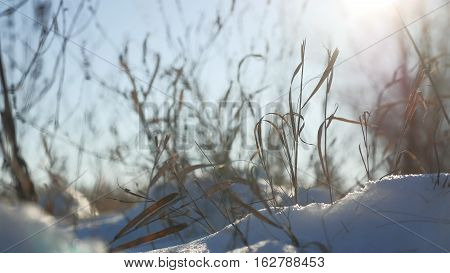 dry grass sways in wind winter snow nature landscape