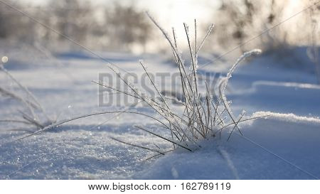 frozen grass sways in the wind in winter snow falls nature beautiful sunlight sun glare