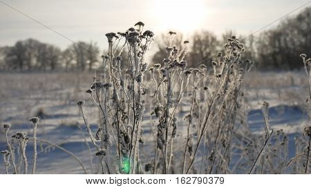 frozen grass sways in wind sunlight in the winter snow falls nature beautiful sun glare