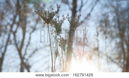 dry grass swaying in wind silhouette sunlight nature landscape