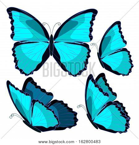 Set Blue Morpho The Butterfly Monarch. Vector Illustration
