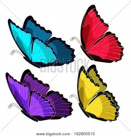 Set Blue Morpho The Butterfly Monarch Color  Vector Illustration