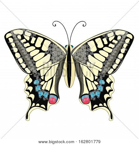 Machaon Butterfly Close Up Europe. Vector Illustration