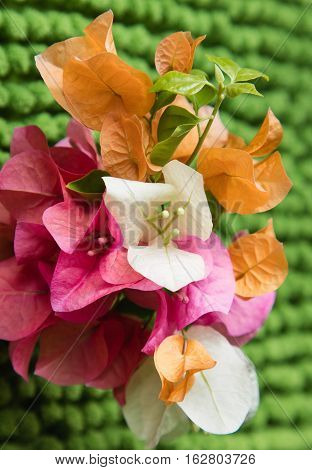 A collection of orange pink and white flowers with a green background.